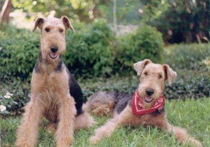 Tex & Sadie 1988